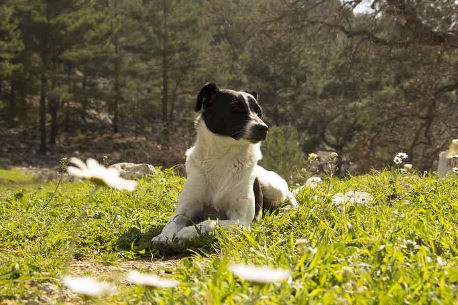 Osteopathie chien