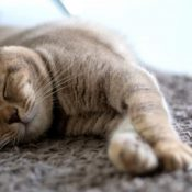 Ostéopathie et sommeil