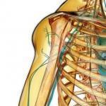 Ostéopathe Sucy-en-Brie